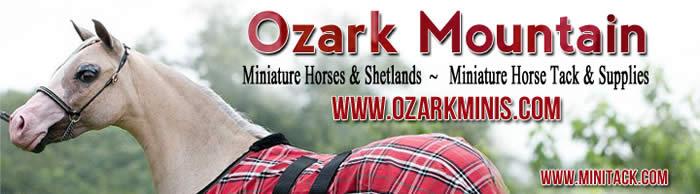 ozark miniatures and shetlands