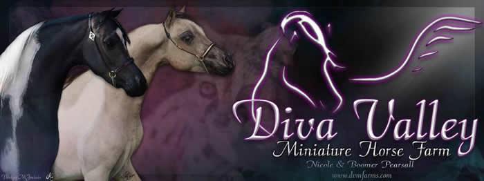 dvm farms mini horses